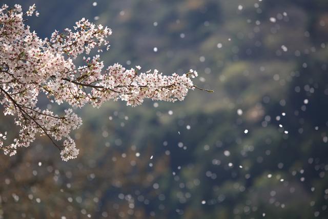 春の御献立例「瑠璃」